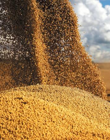 Perfil dos profissionais em agronegócio no Rio Grande do Sul
